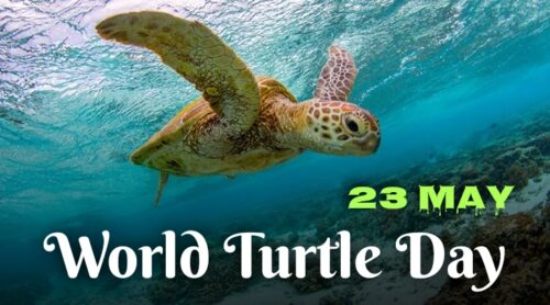 World Turtle Day 2021. Why It is Happening on 23 May? History and all Deets...