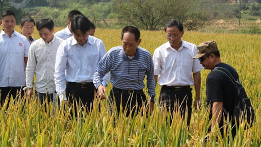 Yuan Longping dies at 91, Father of hybrid rice. Real Reason Revealed!