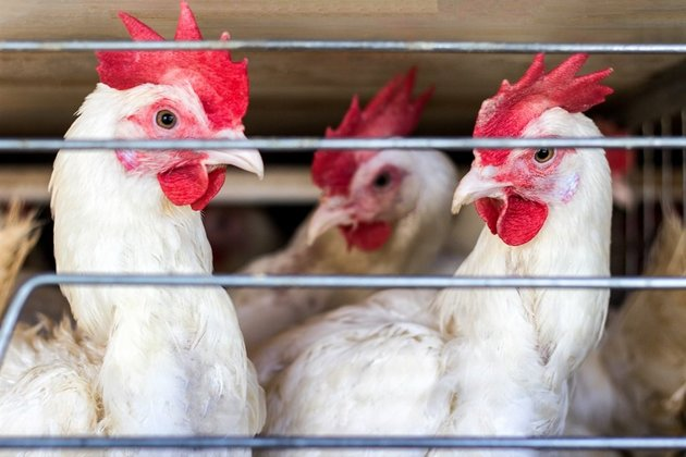 China Confirms First Human Case of H10N3 Bird Flu Strain, Can be Panoramic? WARNED